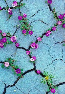 flores cracks